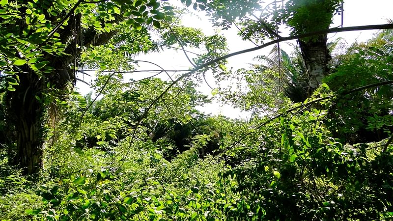 Maha to remove 1,000 illegal houses on mangrove land