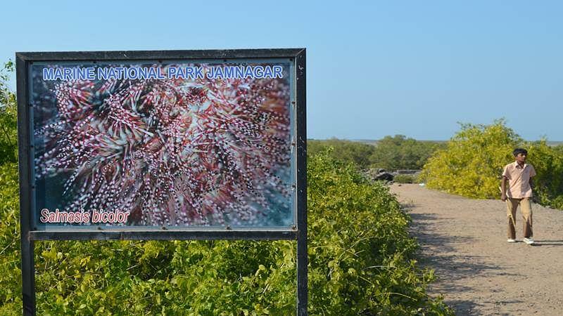 Coral Wonderland of Narara Marine National Park