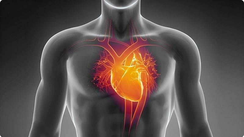 Our heart cells behave differently in space