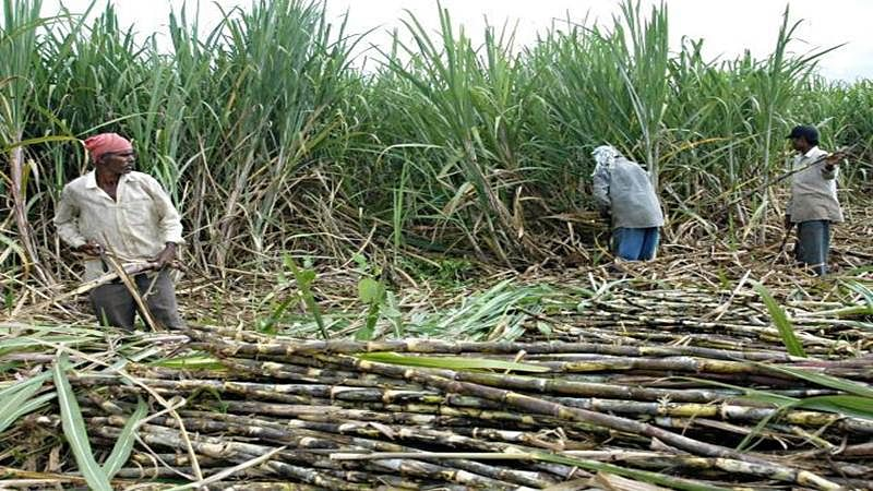 Mumbai: Insurance benefits, EPF for sugarcane labourers