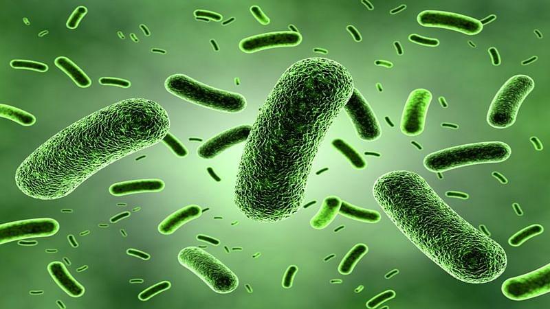 Nitrogen may help to boost gut health