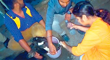 Indore: Dogs eating cows alive at Vet hospital