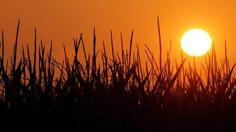 Record hot year 2015 may become new normal by 2040: Study