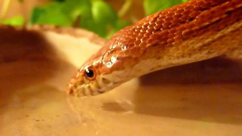 Mumbai: Residents get live snake from a water tap near Kalyan