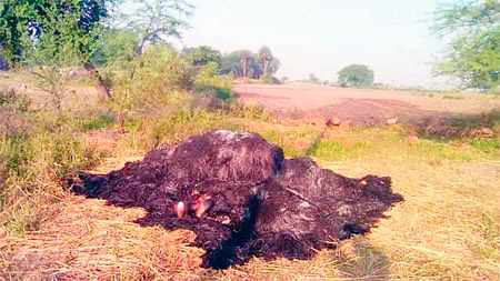 Bhopal: Burnt body of minor girl recovered