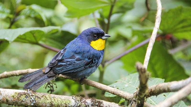 Over 200 more bird species at risk of extinction: Study