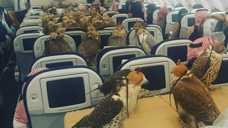 Saudi prince buys airplane seats to transport 80 falcons