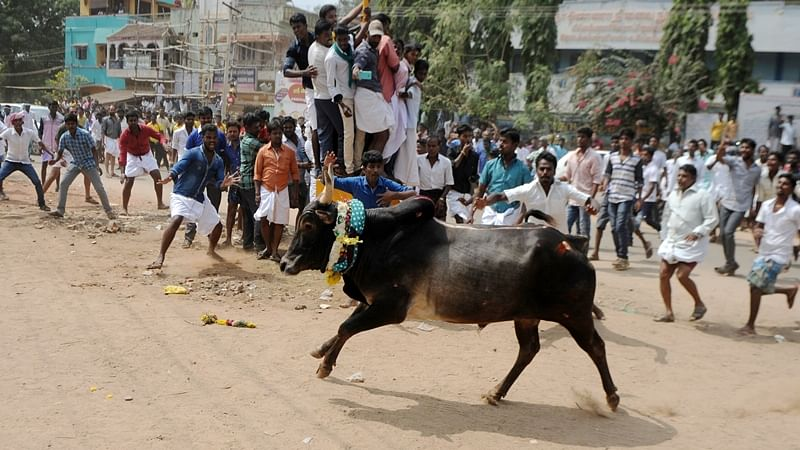 From Kamal Hassan to Rajnikanth Southern stars come in support for Jallikattu