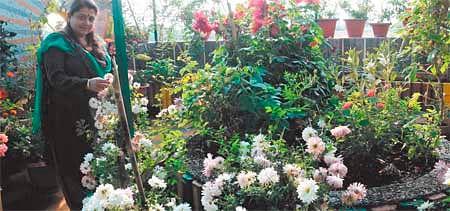Bhopal: Shalini Gupta's terrace garden a riot of colours