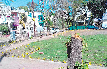 Bhopal: Tree stumps dot this park, residents indifferent