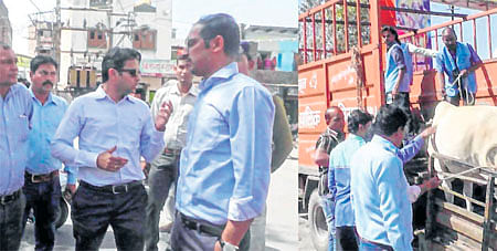 Ujjain: After five accidents due to stray cattle last month, UMC acts against cattle owners