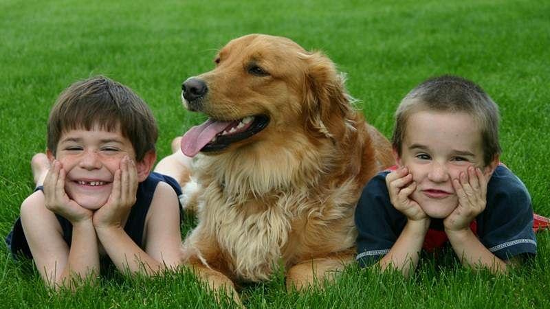 Dogs have kids-like social skills