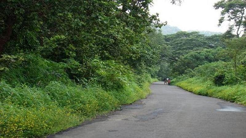 Mumbai: No entry fee to national park on Environment Day