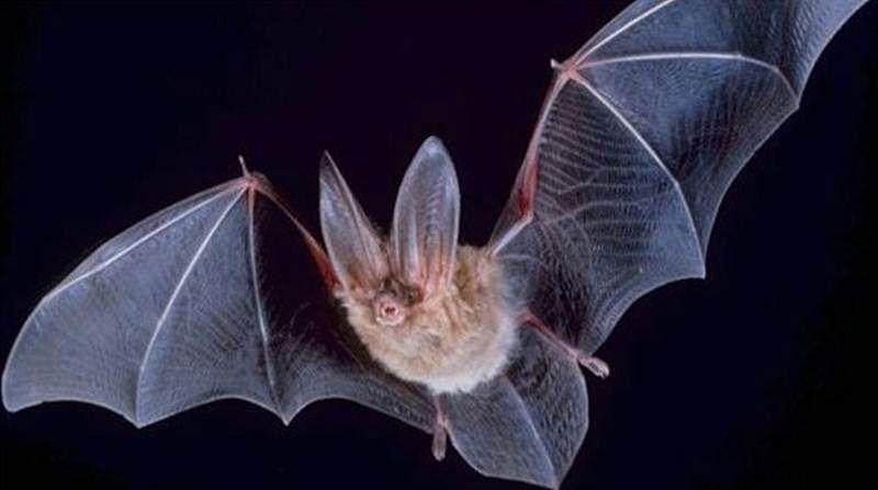 Ancient DNA traces of leukaemia found in bats