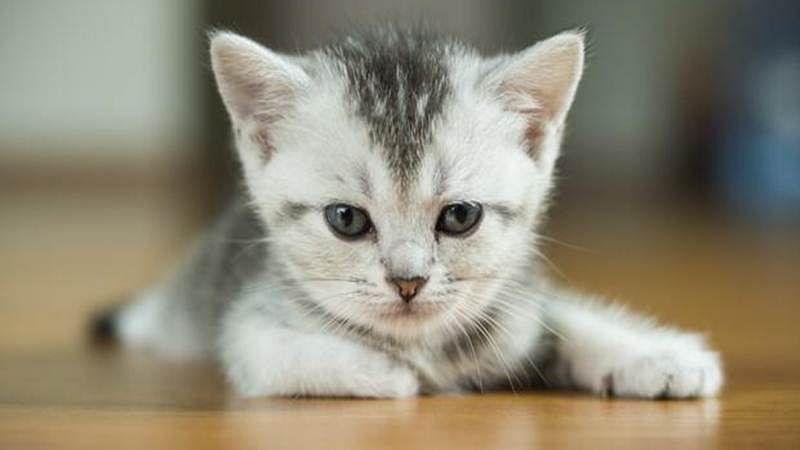 Cats like human interaction more than food