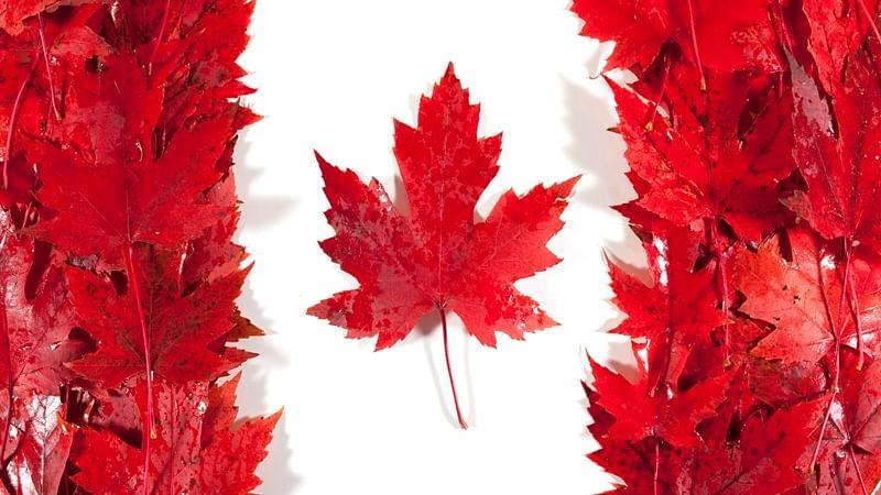 Canada introduces legislation to legalise marijuana
