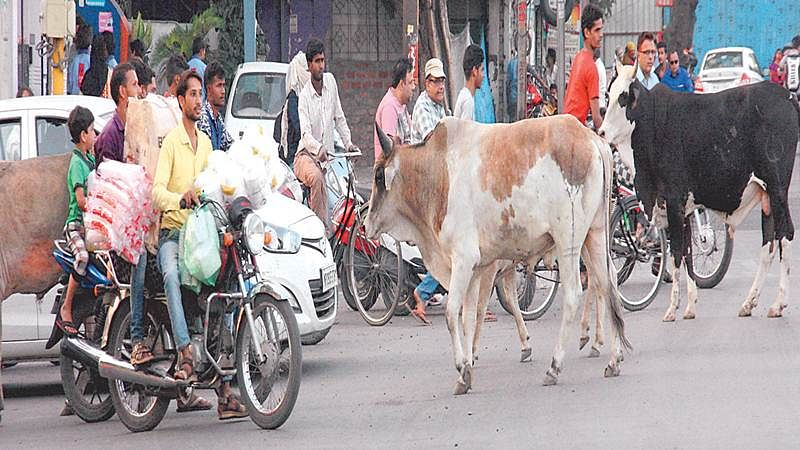 Bhopal: BMC to develop facility for dead cattle