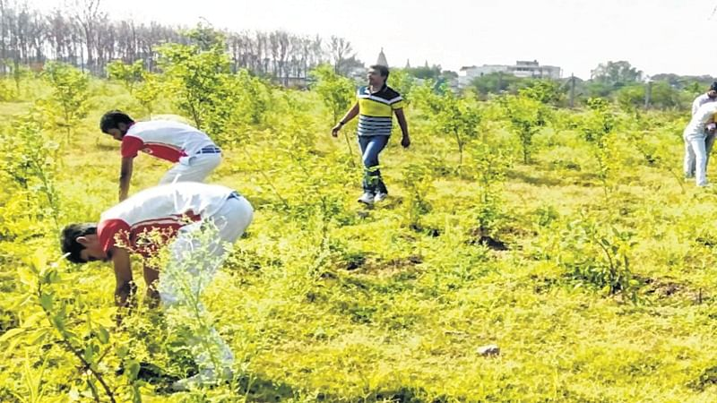 Ujjain: 'Kshipra action' to strengthen green drive