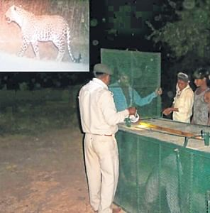 Bhopal: Leopard still out of forest department's reach, panic escalates