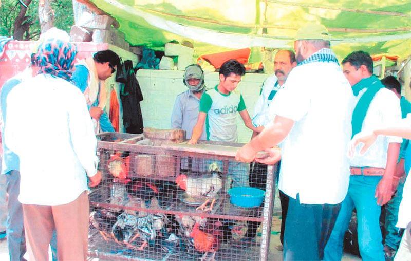 Bhopal: BMC continues drive against 'illegal' meat shops