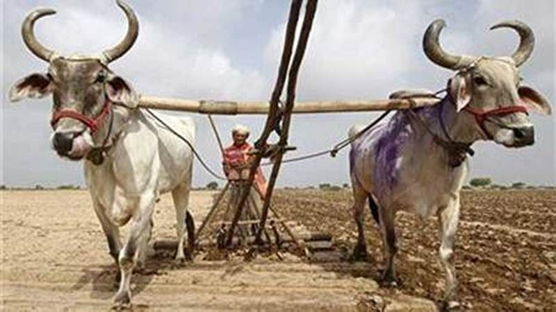 Maharashtra government to exclude farmers with other source of income for loan waiver