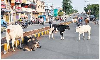 Bhopal: State Govt may open Gaushala on 4 acre land at Gandhi Nagar