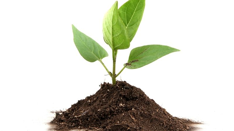 Bhopal: 'All should take part in plantation drive'