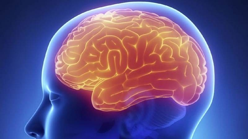 Men's brains diminish faster than women's