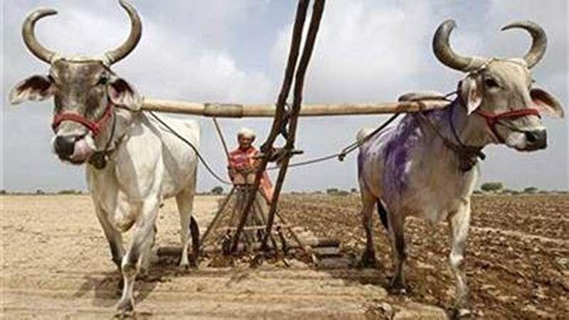 Maharashtra: BJP govt treating hailstorm-hit farmers as criminals, accused Opposition