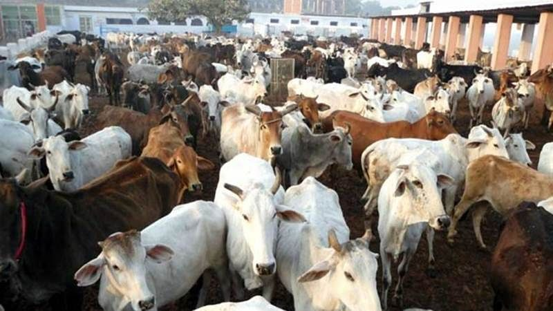 700 kgs of suspected beef seized in Mumbai, 2 detained