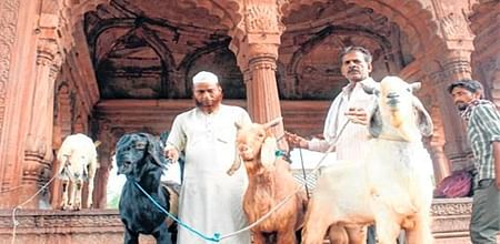 Bhopal: No takers: Ahead of Eid, goat traders get sluggish response