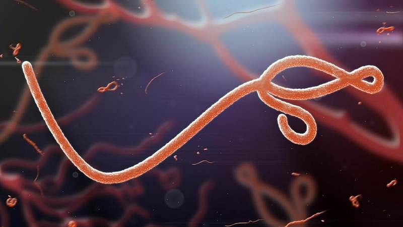 Ebola can persist in survivor's semen 2 years after infection