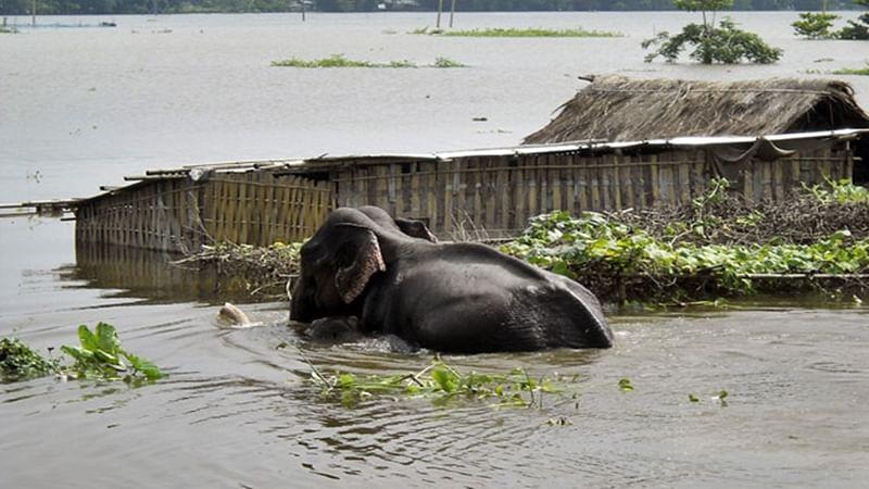 Assam: Over 140 animals found dead in flood-hit Kaziranga National Park