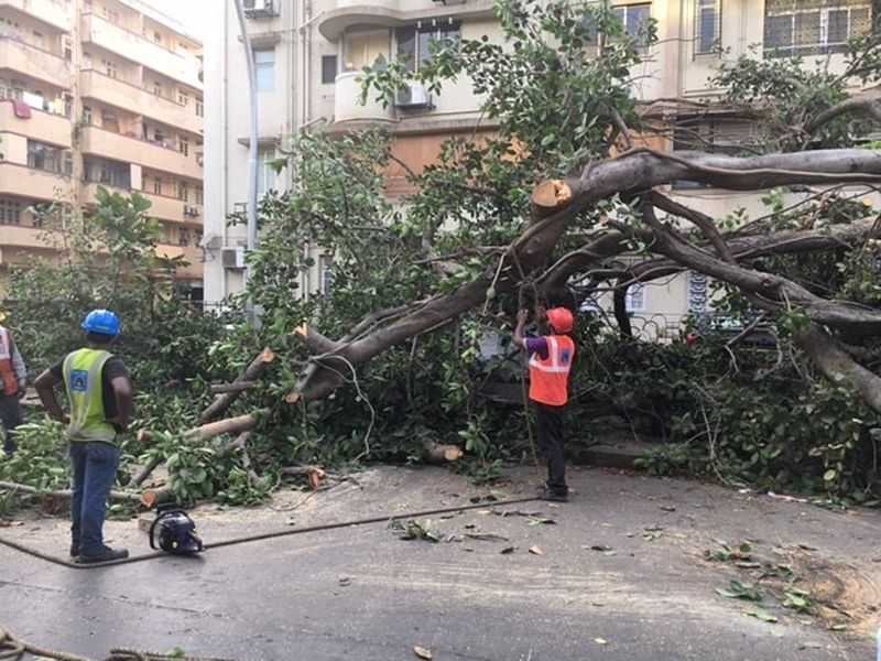 Mumbai: Shiv Sena raises objections to tree cutting proposals