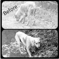 Bhopal: Stray dogs are not a menace if taken care of