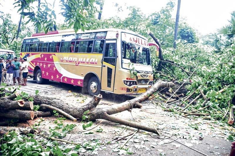 Kids have lucky escape as tree falls on bus