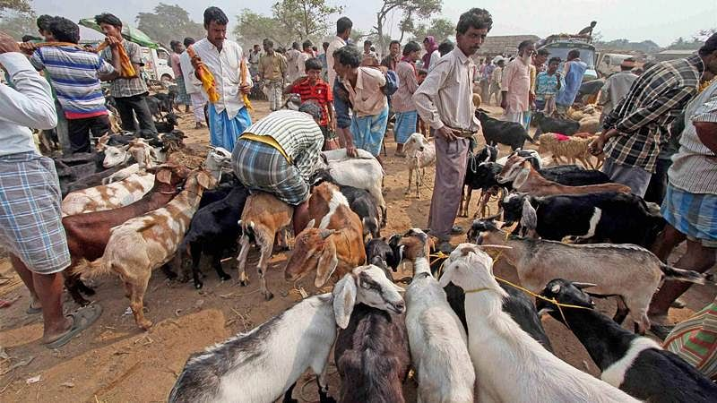 Eid al-Adha 2017: Muslims confused over Bakrid qurbani ritual as abattoirs closed