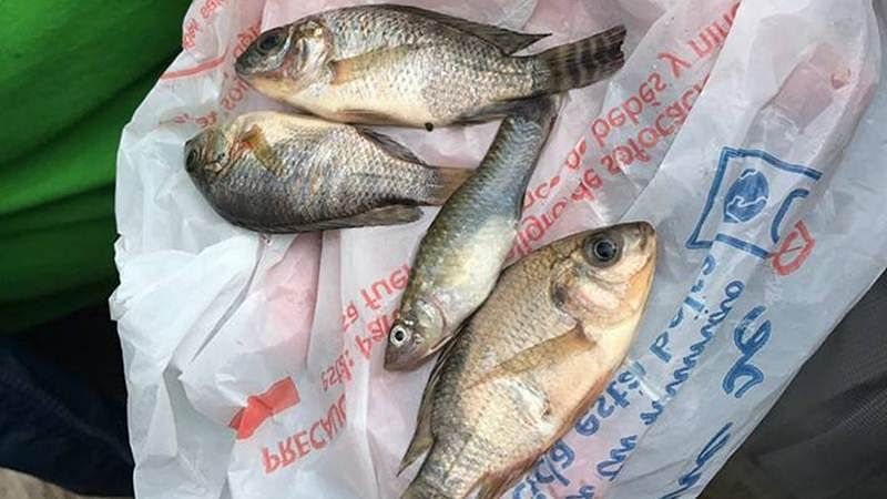 Ban on fish sale in Patna after reports of excessive formalin