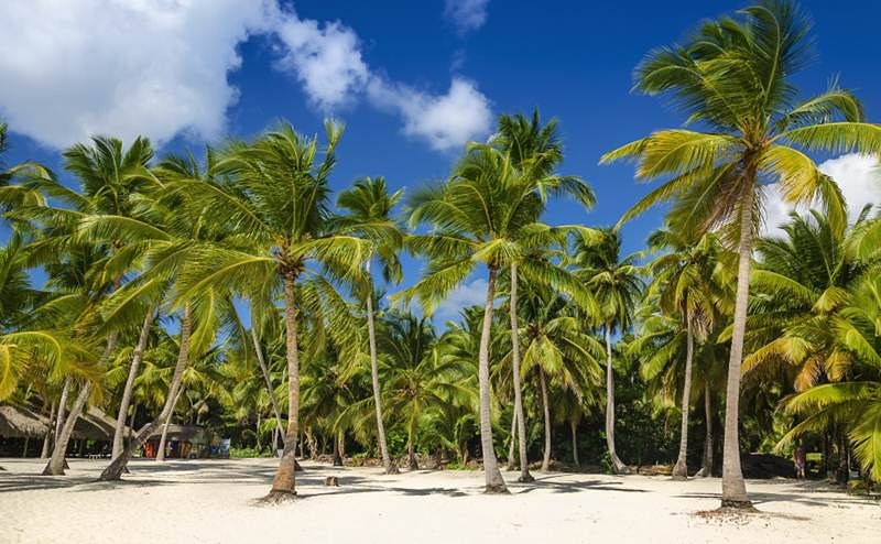 Mumbai: 12,000 coconut trees will be planted in the next 6 months