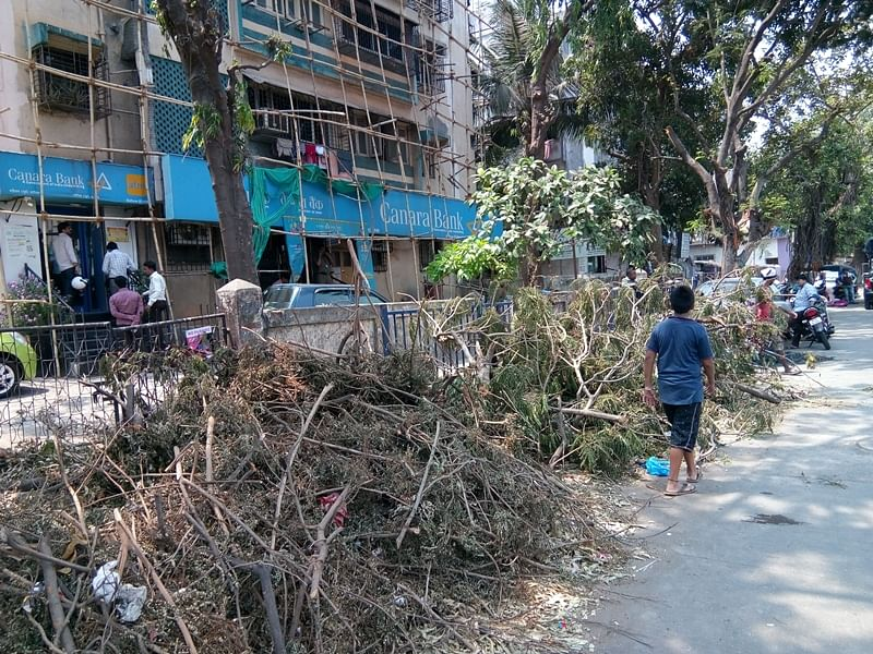 Mumbai: 400 trees to be chopped down by BMC for refinery construction