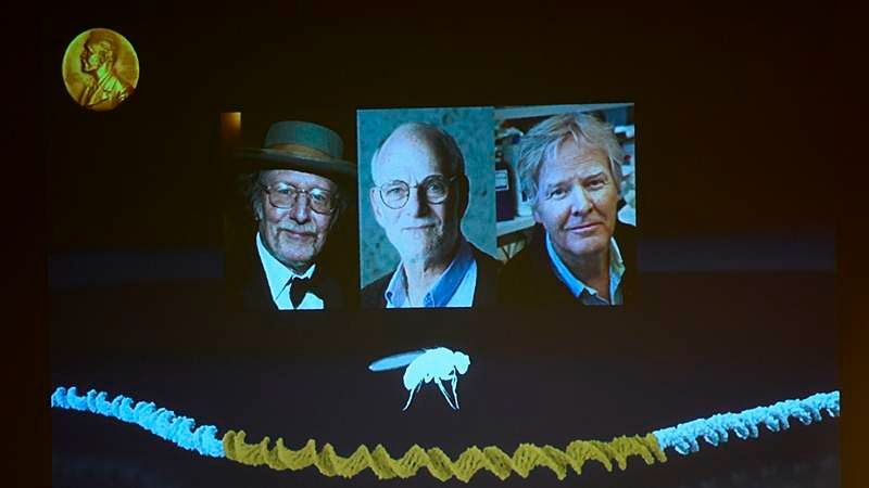 Winners of the 2017 Nobel Prize in Physiology or Medicine (L-R) Jeffrey C. Hall, Michael Rosbash and Michael W. / AFP PHOTO / Jonathan NACKSTRAND