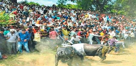 Ujjain: 7 booked for organising bull fights