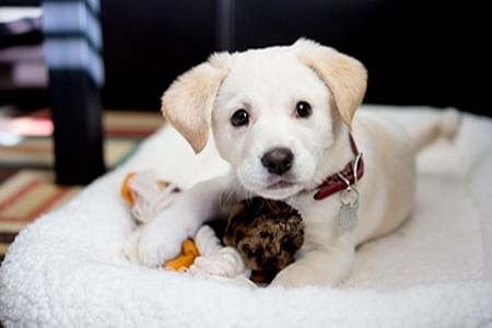 Here are some apps for pet lovers