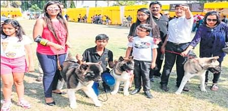 Indore: Over 300 participants put their best paw forward at KCI dog show