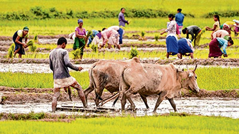 Maharashtra: 2 sugar cane farmers protesting hurt in pellet gun firing