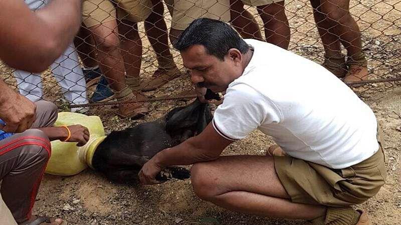 Saviours! Bengaluru cops rescue stray dog whose head got stuck in pot