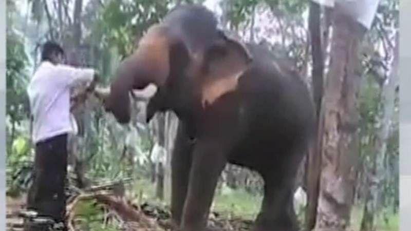 Man trampled to death by elephants in C'garh