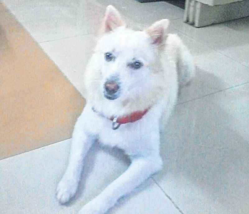Thane: Sheru, loved by a colony full of policemen, goes missing