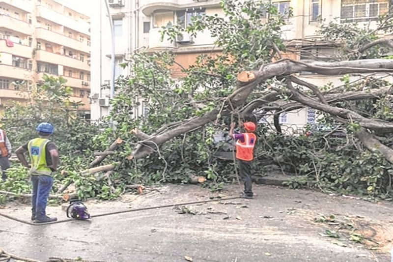 Mumbai: Shiv Sena continues to fight against tree cutting between Jogeshwari and Goregoan for metro project