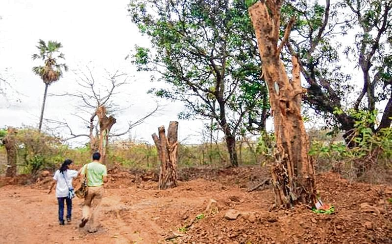 Environmentalist seeks SIT to inspect the actual numbers of trees chopped